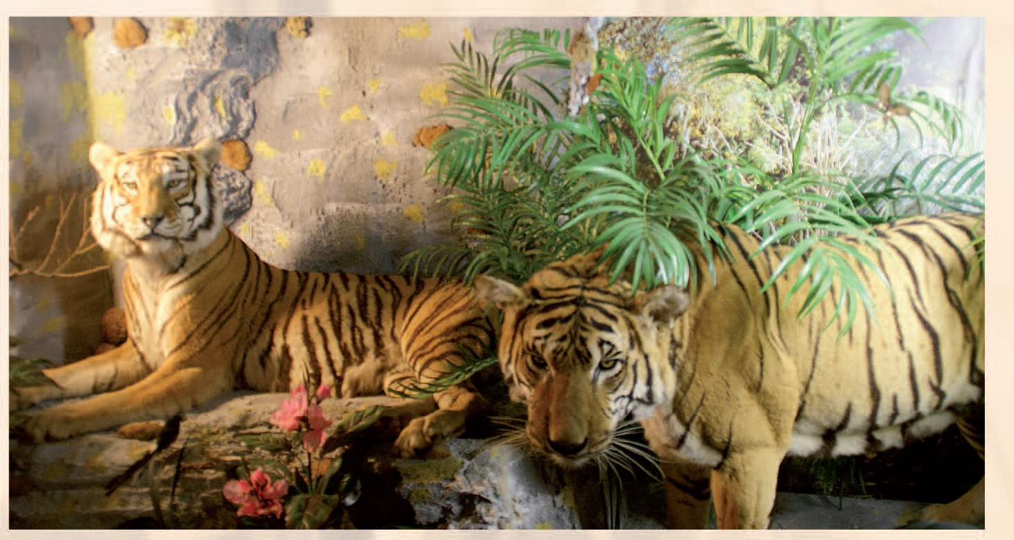 museum zoological