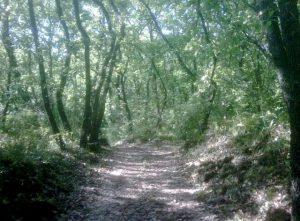 nature preserve of Monte Serra of Sotto
